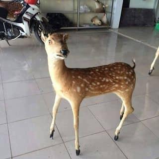 Nai nhỏ nhỏ xinh xinh của mathehieu tại Shop online, Huyện Bù Gia Mập, Bình Phước - 1187576
