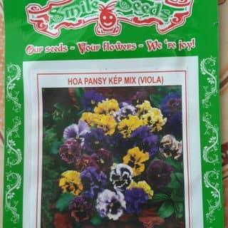 Pansy kép của vobich8 tại Đà Nẵng - 1287821