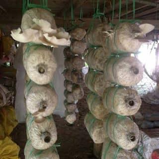 Phoi nam bao ngu trang của minhmil tại Chợ Trà Vinh, phường 3, Thị Xã Trà Vinh, Trà Vinh - 2130822