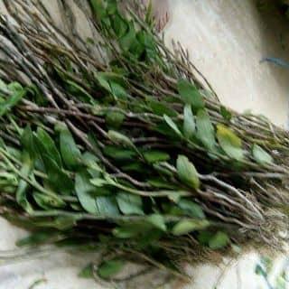 Phong lan rung tu nhien của buihai29 tại Đà Nẵng - 1445396