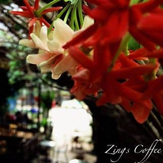 Quán cafe của kakalls11 tại 111A Trần Văn Ơn, Phú Hòa, Thị Xã Thủ Dầu Một, Bình Dương - 3597145
