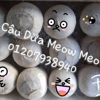 Rau câu trái dừa của kellyqueen1997 tại 01207938940, Xã Đức Hòa Hạ, Huyện Đức Hòa, Long An - 194830