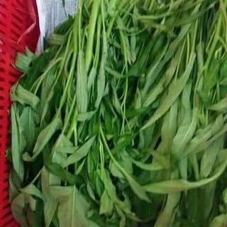 Rau muống sạch của thuyvynguyenvan11 tại Lâm Đồng - 3771169