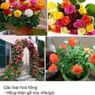 Sắm hạt giống trồng gieo chào xuân thui của mailan223 tại Lào Cai - 2610946
