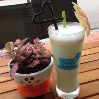 sữa chua táo xanh  của skintomax.vltkshxttuy tại 98 Nguyễn Đăng - Suối Hoa - Bắc Ninh, Thành Phố Bắc Ninh, Bắc Ninh - 376784