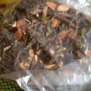 tầm gửi gạo hoa đỏ của kupoon tại tt. Đồng Đăng, Thành Phố Lạng Sơn, Lạng Sơn - 1472359