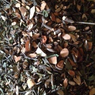 tầm gửi gạo hoa đỏ của kupoon tại tt. Đồng Đăng, Thành Phố Lạng Sơn, Lạng Sơn - 1472513