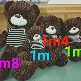 Teddy nâu của lamda2 tại Sóc Trăng - 3849963