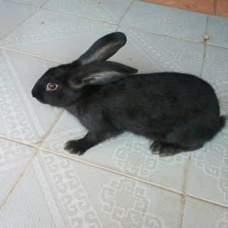 Thỏ đen huyền thoại của chuoixanh2 tại Tây Ninh - 1772777