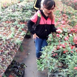 Thung lũng hoa của trangminhuong tại Lào Cai - 1429570
