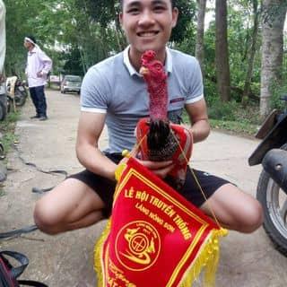 Tía chân vàng của louisanh2 tại Thanh Hóa - 3227228