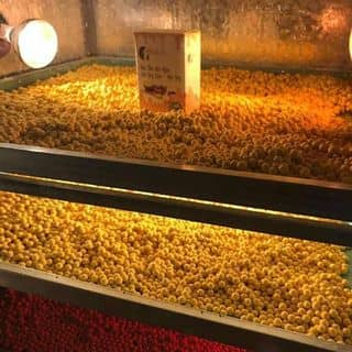 Vien tinh bot nghe sua ong chua mat ong của nguyenkieudiem9 tại Hồ Chí Minh - 3281529