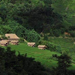 View của Eco Palms House của thaole89 tại tt. Sa Pa, Huyện Sa Pa, Lào Cai - 2906778