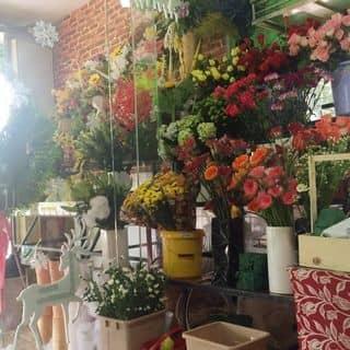 Vườn hoa của shop của phamdi7 tại Trần Đại Nghĩa, Phường 4, Thành Phố Vĩnh Long, Vĩnh Long - 2267917
