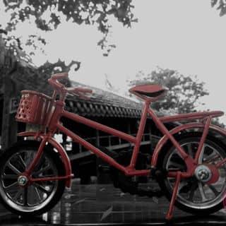 Xe đạp mô hình của quanhoangdinh tại Thừa Thiên Huế - 1009500