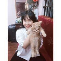 Trang Chu trên LOZI.vn